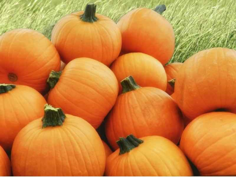 upcoming fall festivals halloween events in east bay - Halloween Bay Area Events