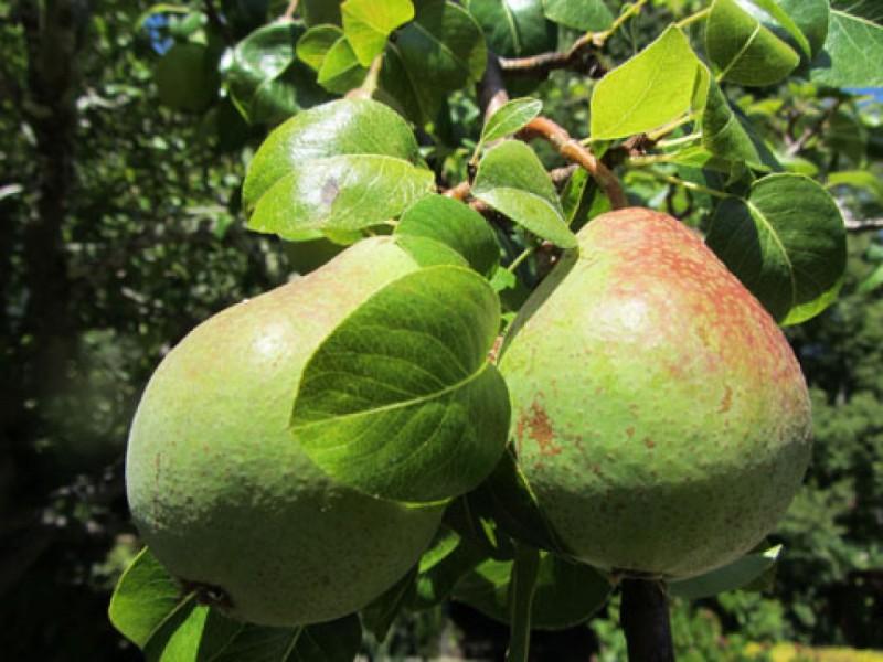 Calendar Bulletin Board Set : History san rafael arcángel mission pears saved with