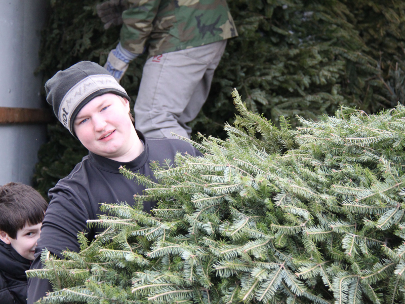 Boy Scout Troop 507 Christmas Tree Pickup - Winchester, MA Patch