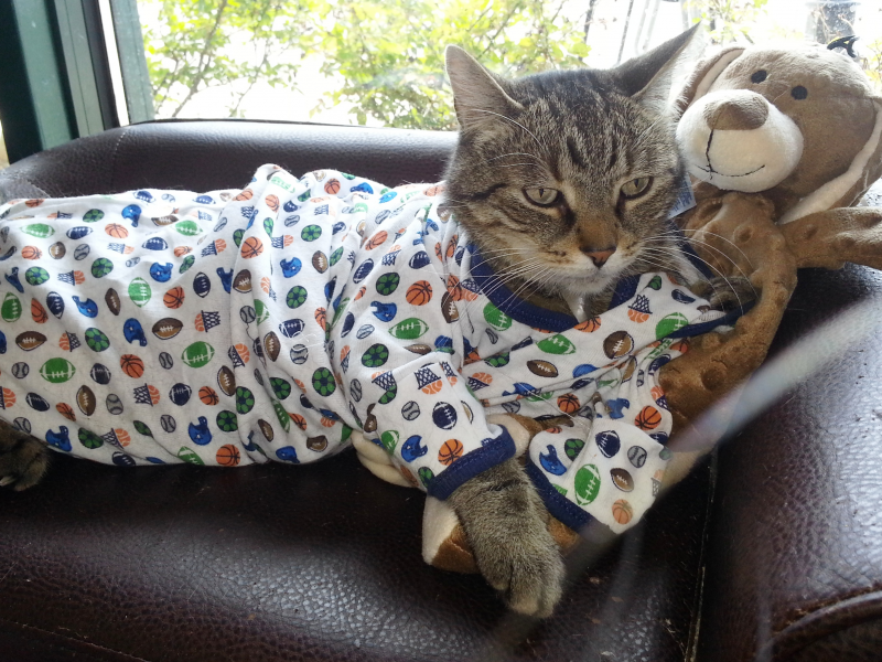 Find great deals on eBay for cat pajamas. Shop with confidence.