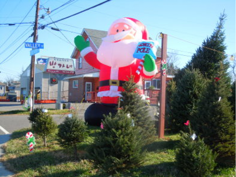 where to buy a christmas tree in annandale this weekend - Where To Buy A Christmas Tree