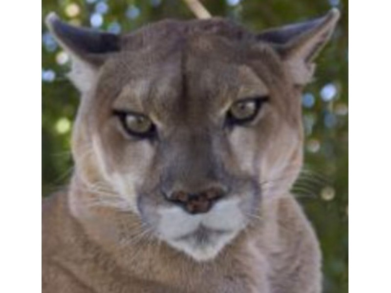 harrison valley cougar women Welcome to the official youtube channel of the washington state cougars go cougs.