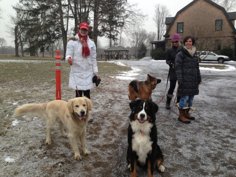 Dog Attack Sparks Discussion On Efficacy Of Invisible