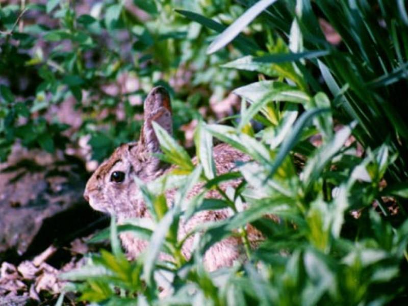 Your Backyard Wildlife Habitat: Begin in Spring to Control ...