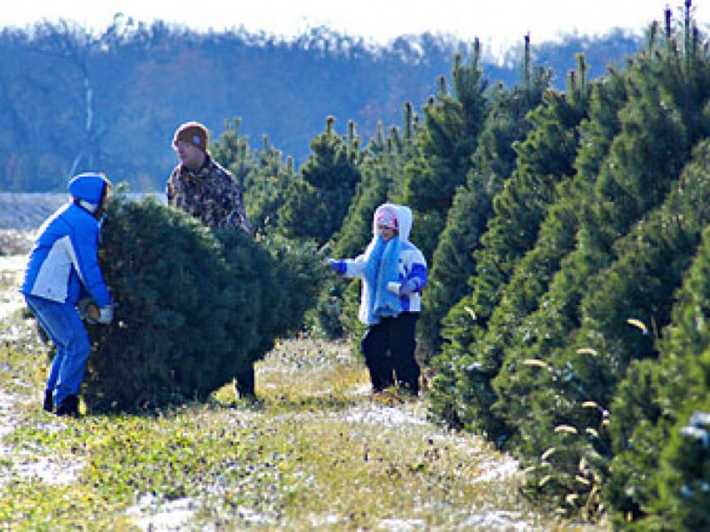Cut Your Own Christmas Tree - Greendale, WI Patch