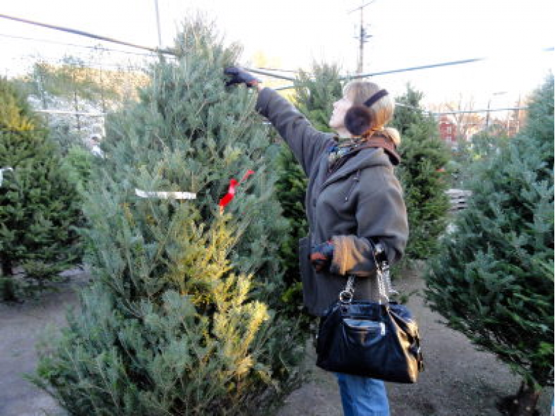 where to buy a christmas tree in glen cove - Where To Buy A Christmas Tree