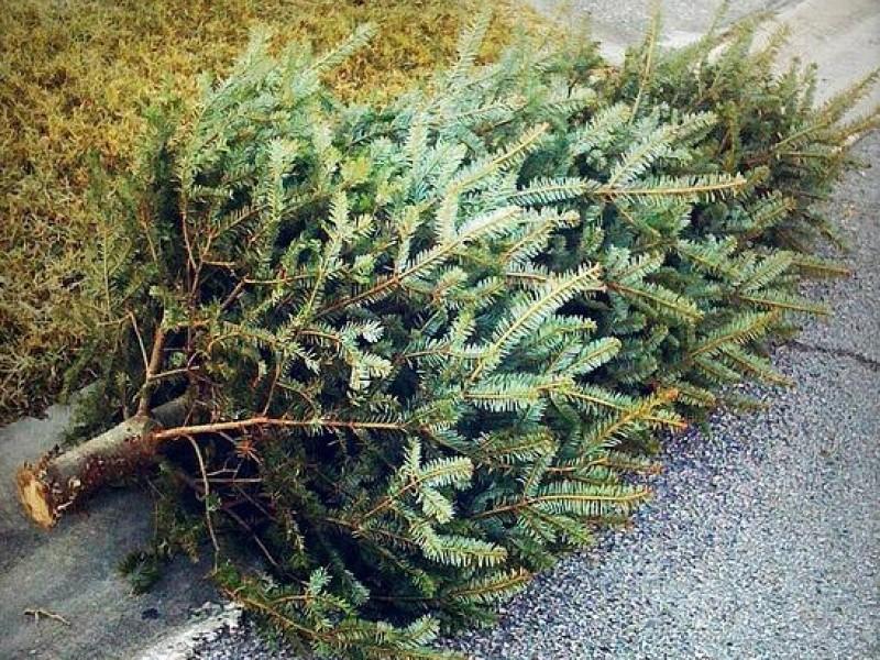 Village Offering Curbside Christmas Tree Pickup - Oak Lawn, IL Patch