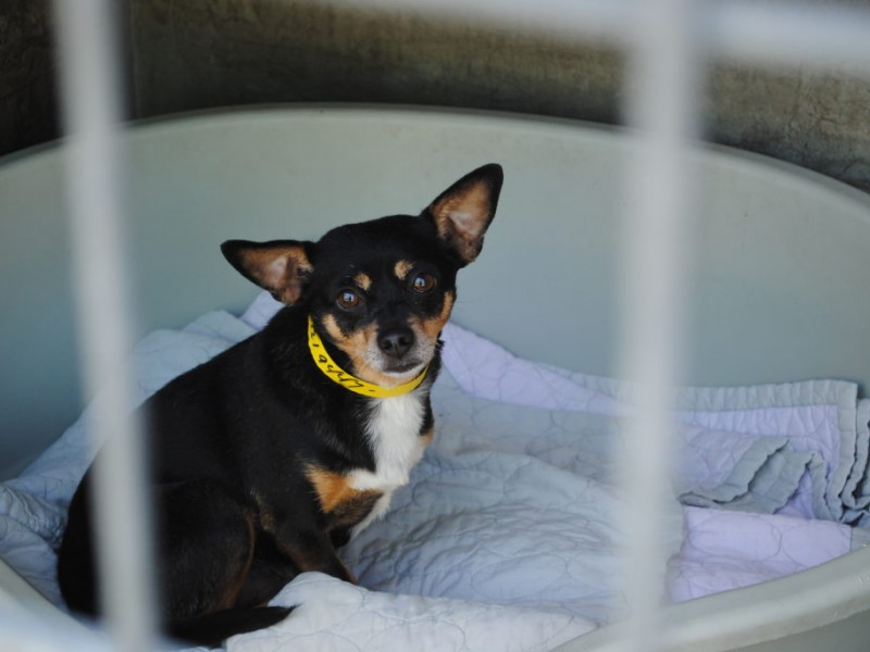 animal shelter near brentwood ca