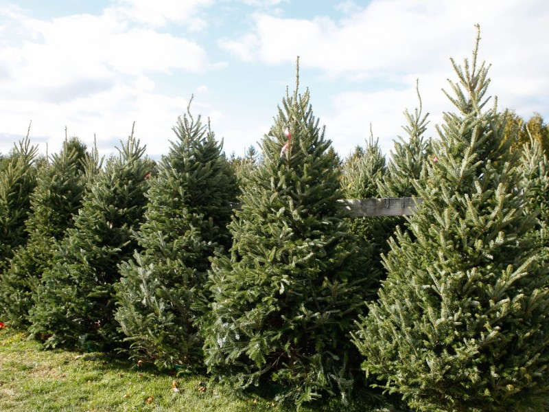 10 Places to Get a Christmas tree. 1.Lewin Farms