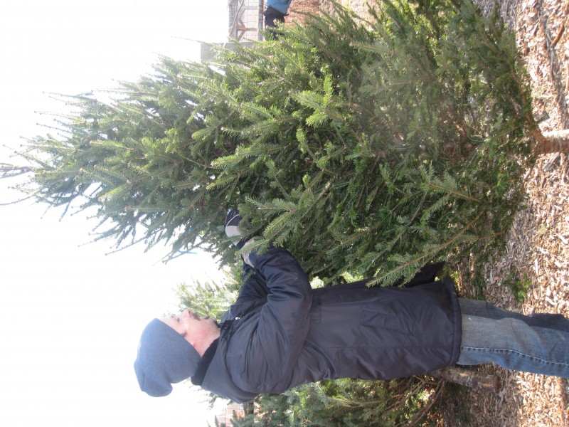 5 local places to buy a christmas tree - Where To Buy A Christmas Tree