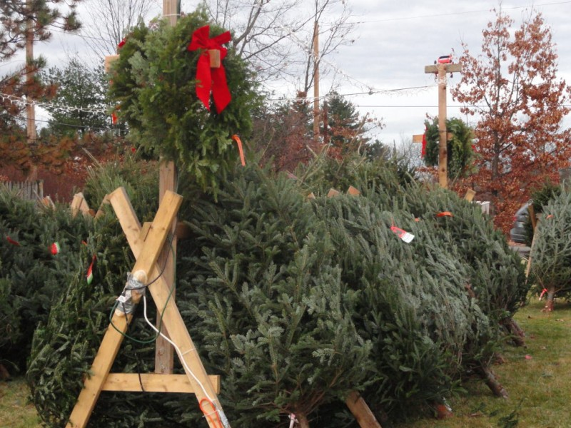 where to buy a christmas tree in beverly - Where To Buy A Christmas Tree