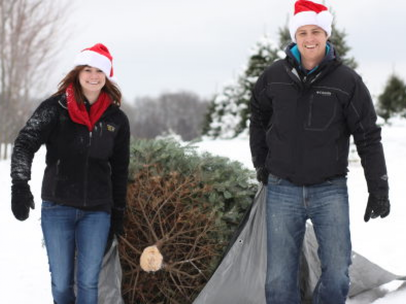 Where To Cut Your Own Christmas Tree In The Chicago 'Burbs And  - Christmas Trees To Cut Down