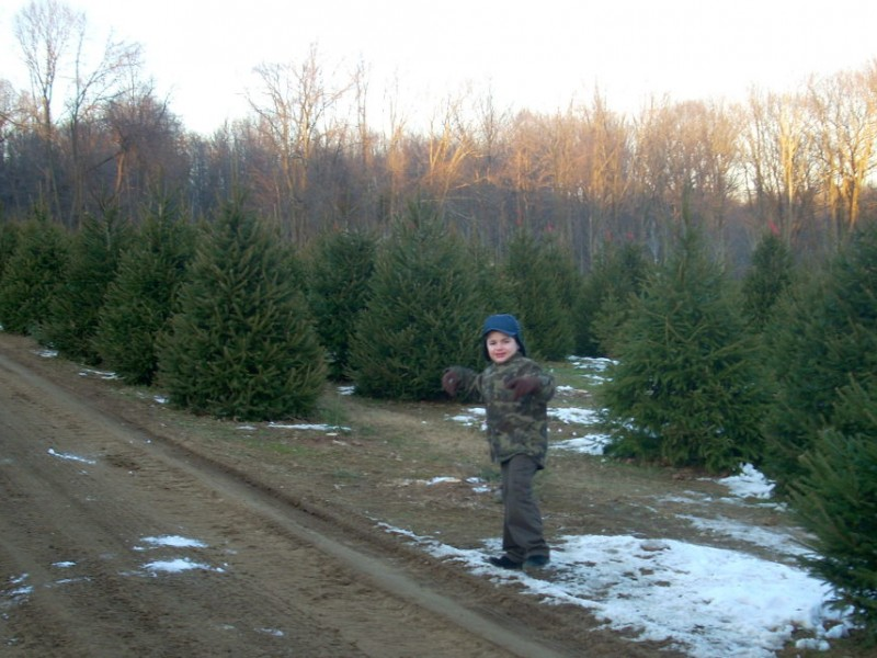 NJ's Cut-Your-Own Christmas Tree Farms - Mahwah, NJ Patch
