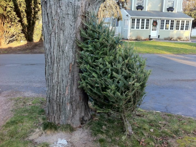 Howard County Christmas Tree Recycling Wraps Up This Week  - Baltimore City Christmas Tree Pickup