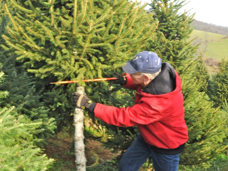 Find and Cut Down Your Own Perfect Christmas Tree - Loganville, GA ...