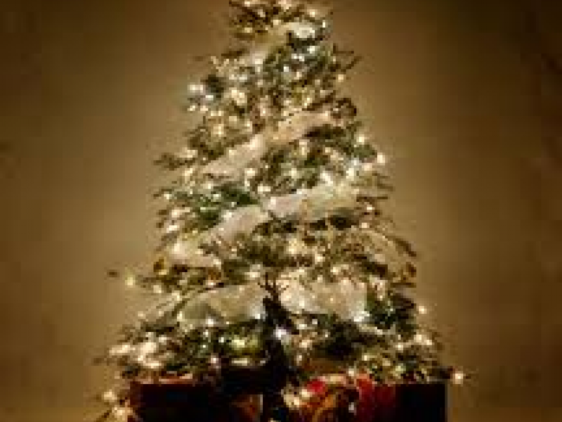 Hamden Public Works Christmas Tree Pickup Starts Monday