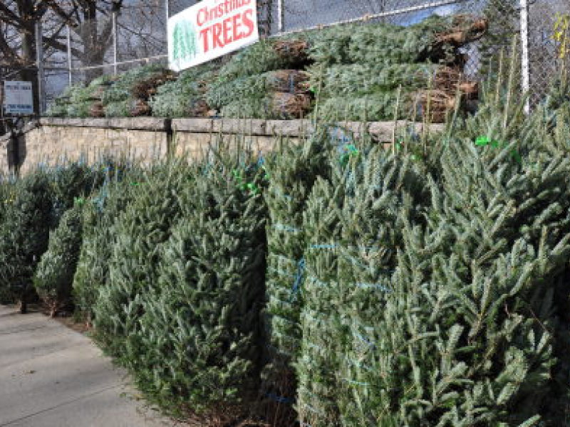 where to buy a christmas tree in queens - Where To Buy A Christmas Tree