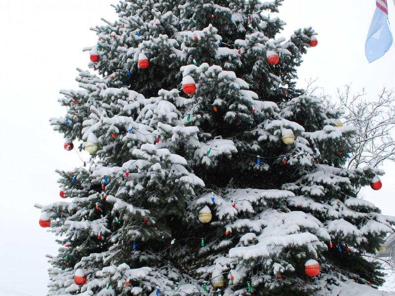 Free Christmas Tree, Lights Disposal in Darien - Darien, IL Patch