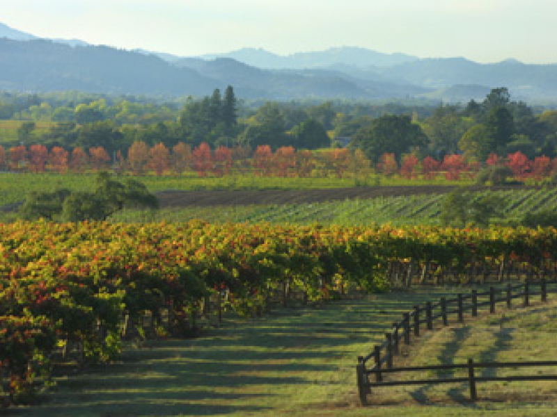 Olive Oil Winners Reflect Terroir Of The Wine Country Healdsburg Ca Patch