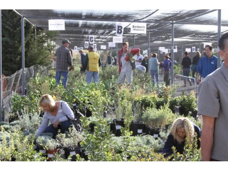 Annual U0027Fall Planting Festivalu0027 At Rancho Santa Ana Botanic Garden
