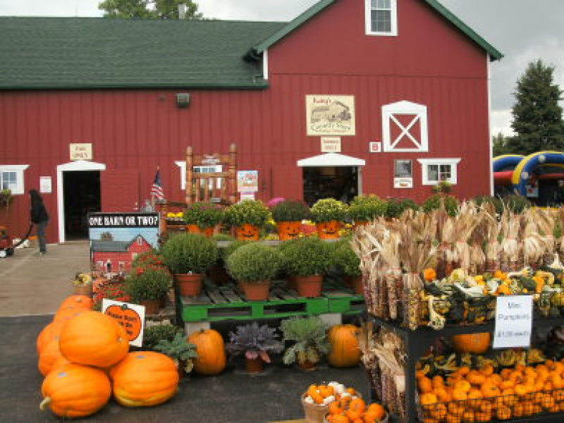 Pumpkin Patches Corn Mazes Fall Festivals In The