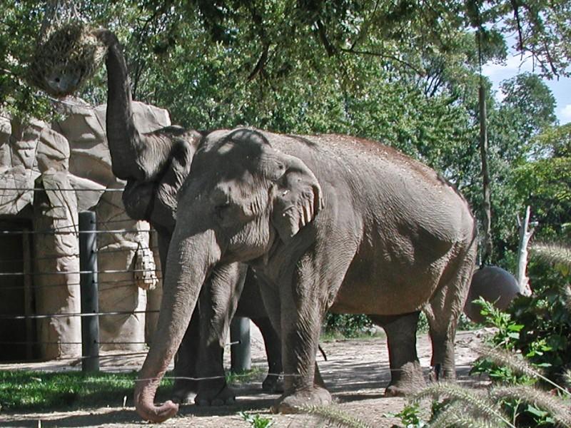 Wanda - Former Detroit Zoo Elephant Who Changed Ethics of ...