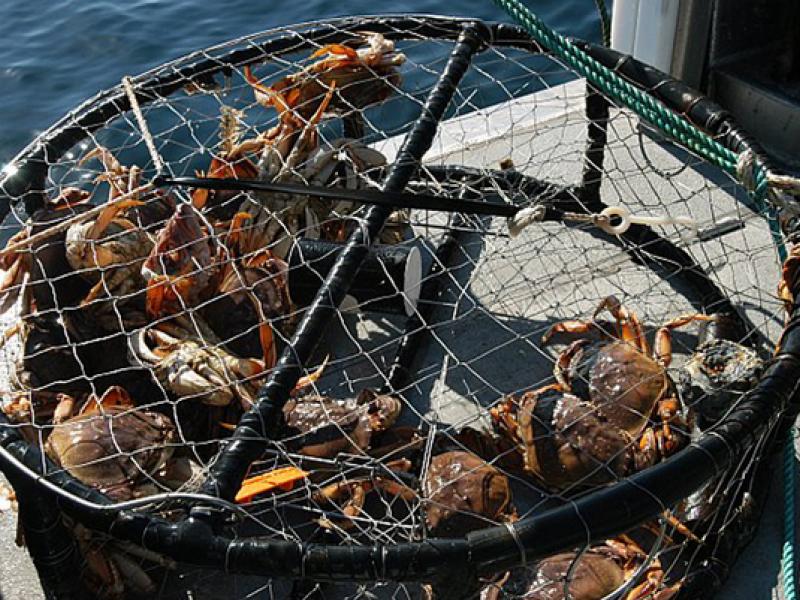 Where to get crab on the half moon bay coastside half for Half moon bay fishing report
