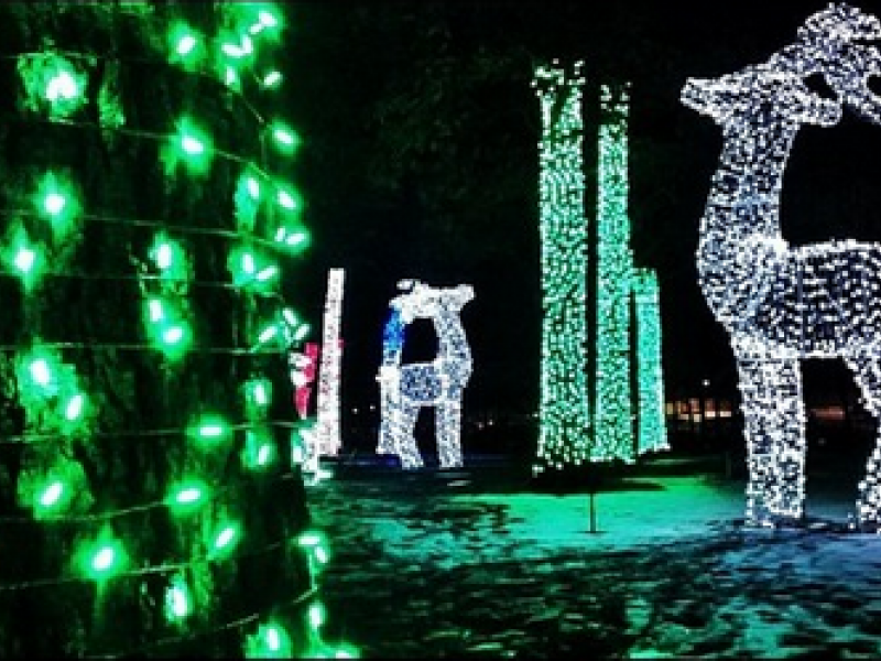 Last Chance to See Wild Lights at the Detroit Zoo - Royal Oak, MI ...