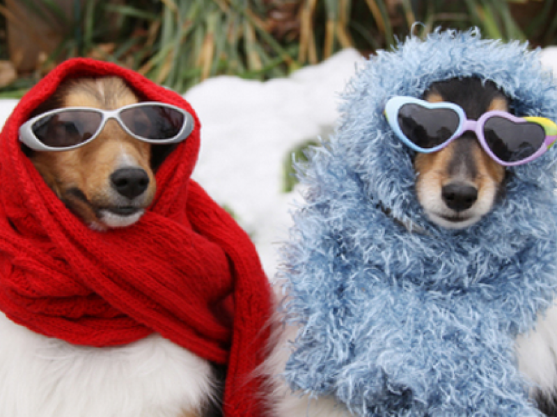 Keeping Your Pets Safe In Freezing Cold Winter Weather