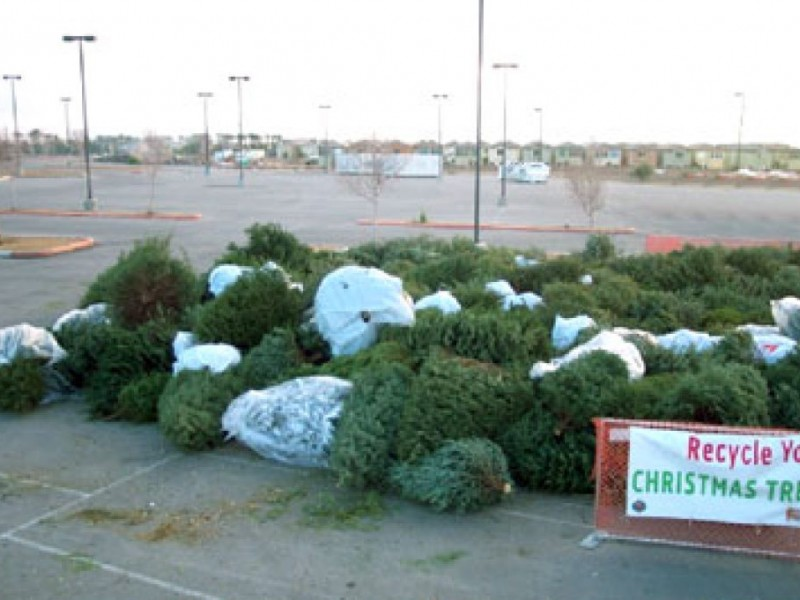 Free Christmas Tree Pick Up Part - 22: Culver City Offers Free Christmas Tree Recycling