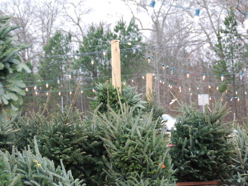 get great prices on christmas trees in alpharetta 0 - Christmas Tree Prices