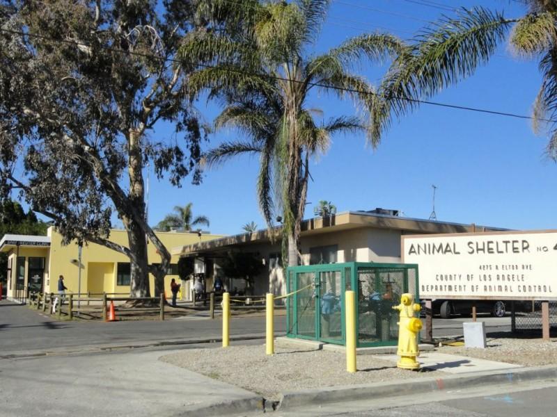 Baldwin Park Animal Shelter Will Also Serve Azusa Baldwin Park Ca Patch