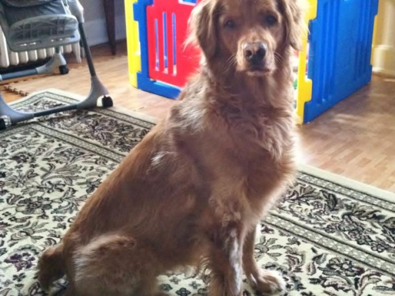 Dogs Who Eat Poop Is It Harmful