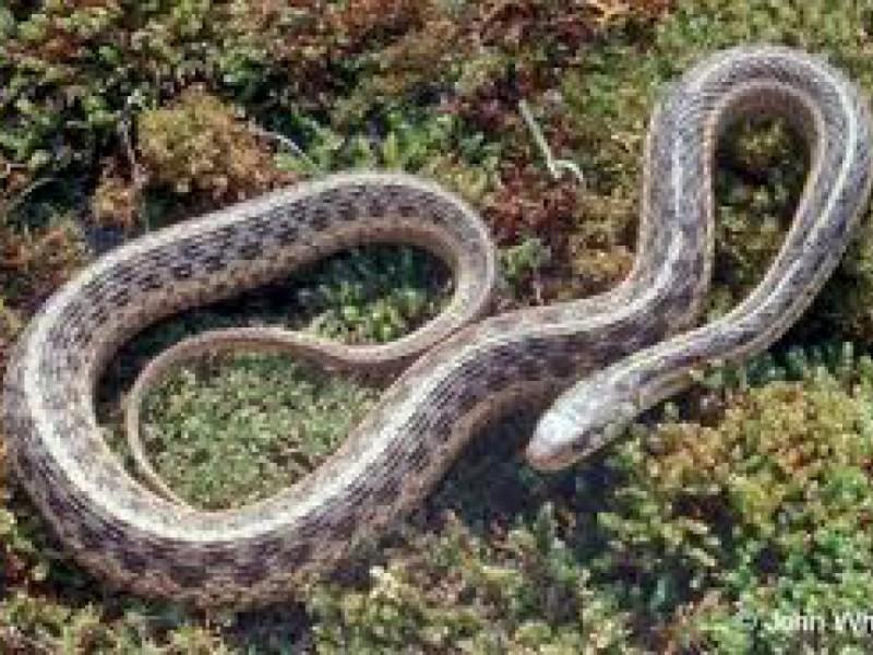 georgia snakes 101